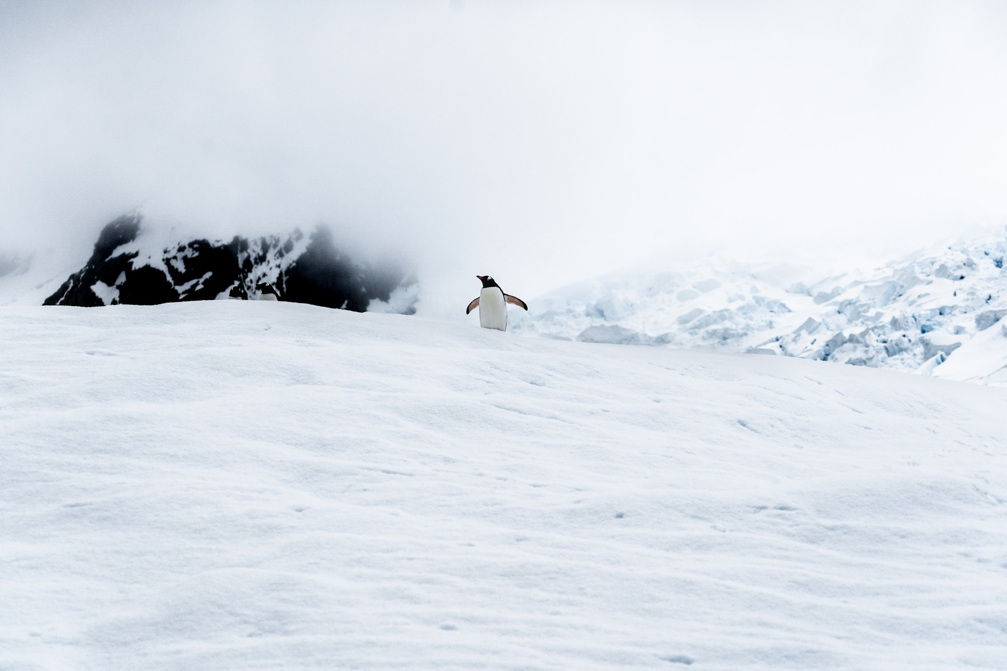 Solo penguin taking in the views